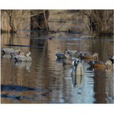 avery 6 pack of pro-grade gadwall decoys 73145
