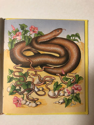 My Little Book of Snakes - Slickcatbooks