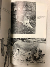 Wild Heart The Story of Joy Adamson, Author of Born Free