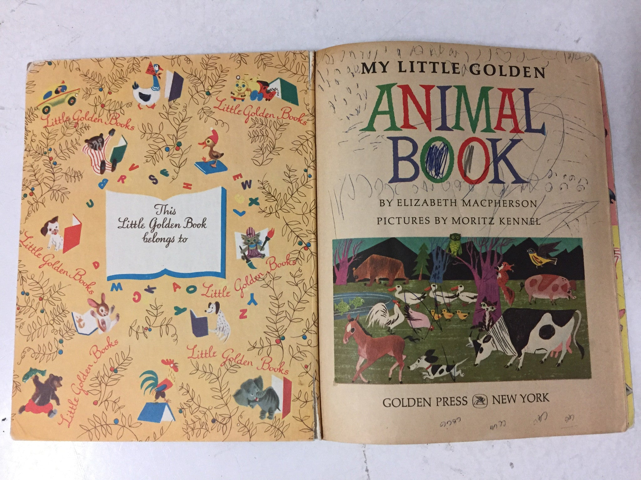 My Little Golden Animal Book - Slickcatbooks