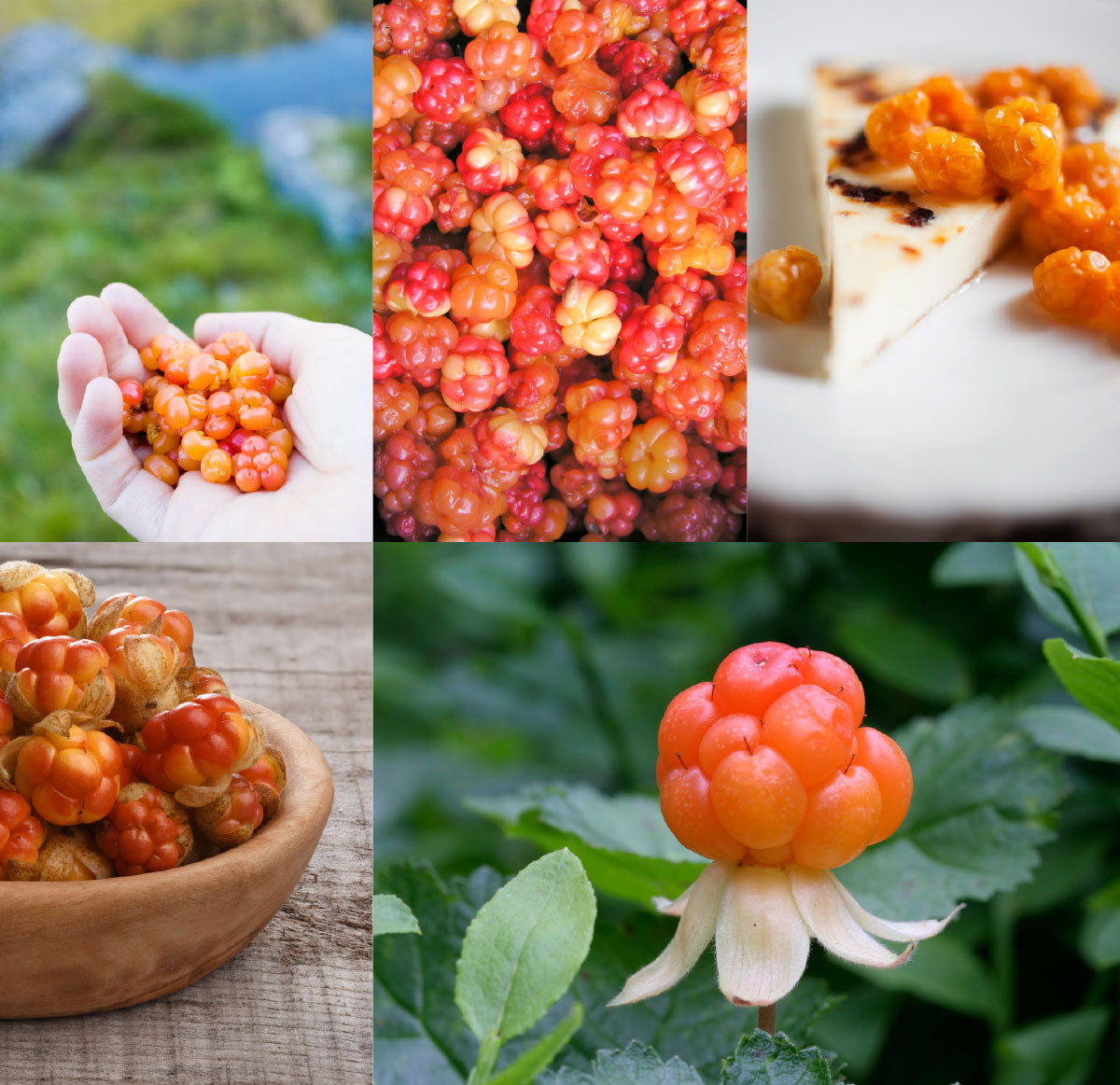 Arctic Cloudberry