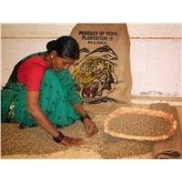 Lady sorting coffee Ballarat ground India