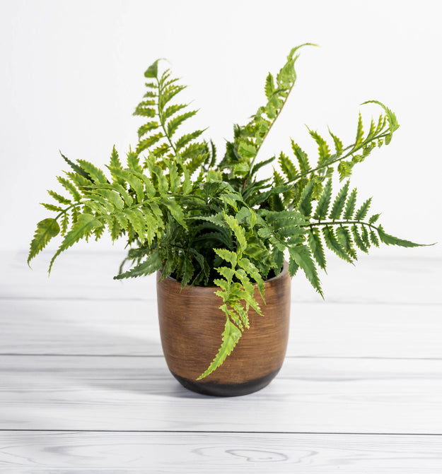 Fern in Weathered Cement Pot