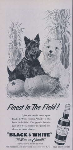 1957 Black & White Scotch Whisky Ad Westie Dog Scottish Terrier Puppy Pumpkin Patch Illustrated Advertising Print Cute Fall Autumn Wall Art