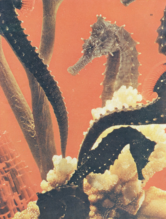 Seahorse Photo Magazine Art Page Sea Life Print Abstract Wall Art Decor