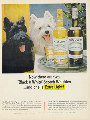 1964 Black & White Scotch Whiskey Ad Westie Scottish Terrier West Highland Terrier Photo Vintage Liquor Advertisement Print Retro Bar Art
