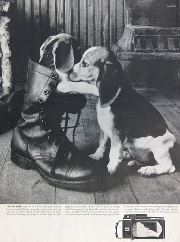 Polaroid Land Camera Ad Puppies Dog in Boot Cute Vintage Advertising Print Wall Art Decor