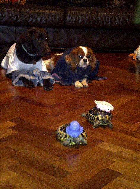 Dogs in denim, tortoises in top hats!