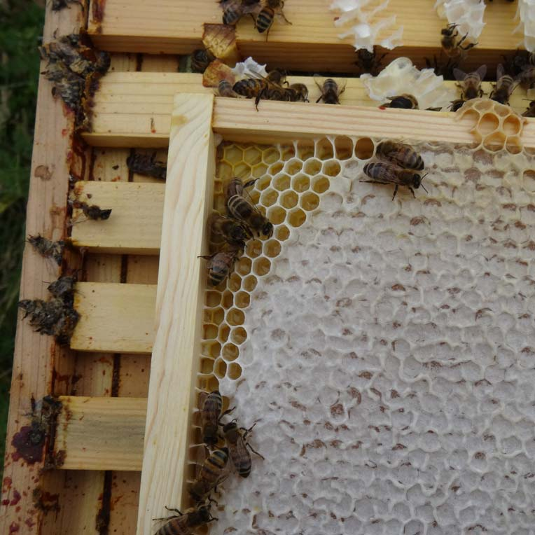 Plastic foundation in a beehive