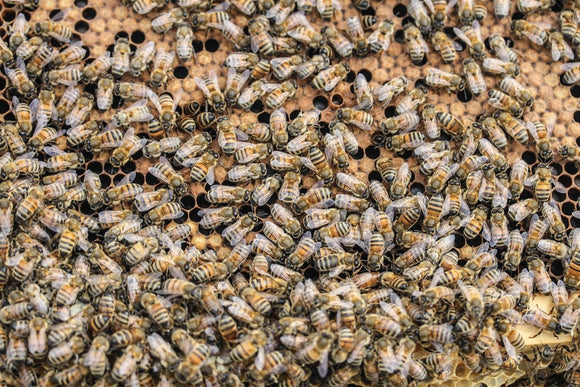 Available end of May/Early June: Italian Buckfast Bees, 1.5kg package with Queen for Collection