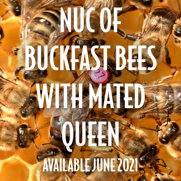 Nuc of Buckfast Bees available from May 17th* 2021 [DEPOSIT ONLY]