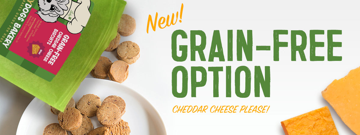 Grain-Free Cheddar Cheese Biscuits dog treats