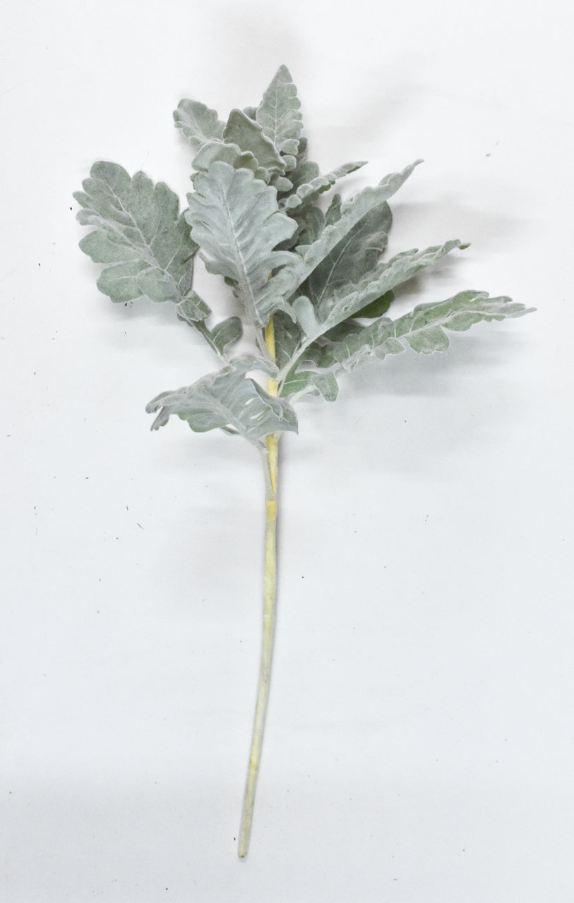 DUSTY MILLER STEMS