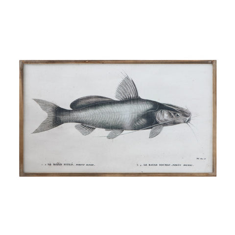 Wood Framed Vintage Catfish Print Picture
