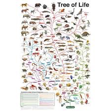 Evolution: The Tree of Life: Poster
