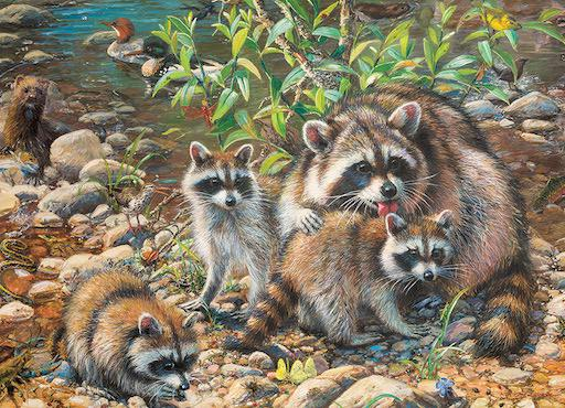Family Puzzle - Raccoon Family 350 pc