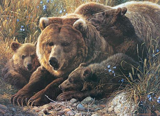 Family Puzzle - Grizzly Family 350pc