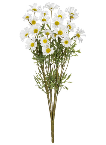 White Daisy Bush