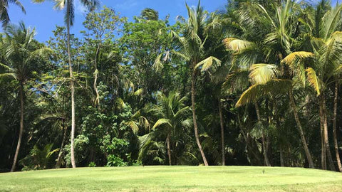 Back nine at Coco Beach International Golf Course