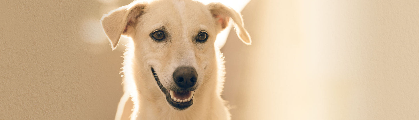 4 Ways to Keep Your Pet's Teeth Healthy and Clean   Primal ...