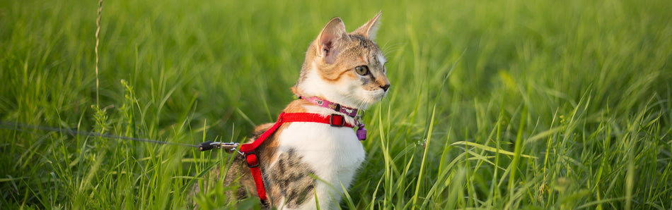 8 Ways To Turn Your Cat Into an Adventure Cat