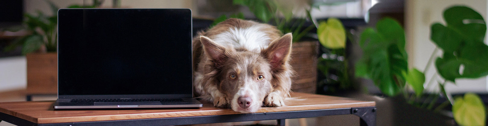DIY Doggie Daycare: 3 Simple Tips for Keeping Your Pup Busy When You Work from Home