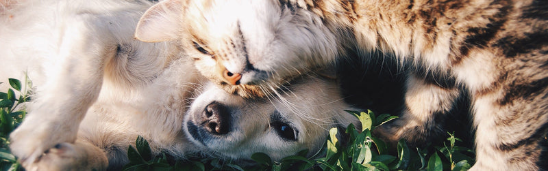 Household Harmony: How to promote peace between your pets