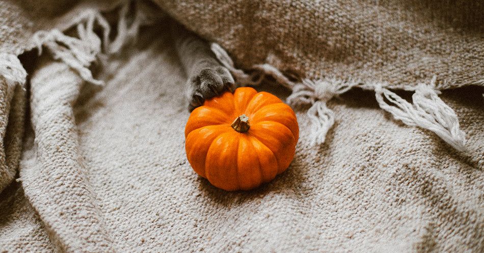 6 Tips for Halloween Safety