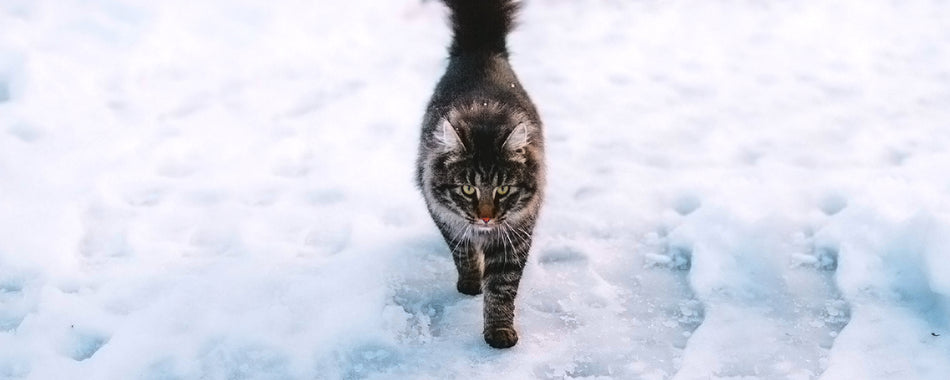 Helping Homeless Cats in the Winter