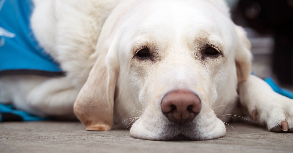 7 Signs of Pet Cancer