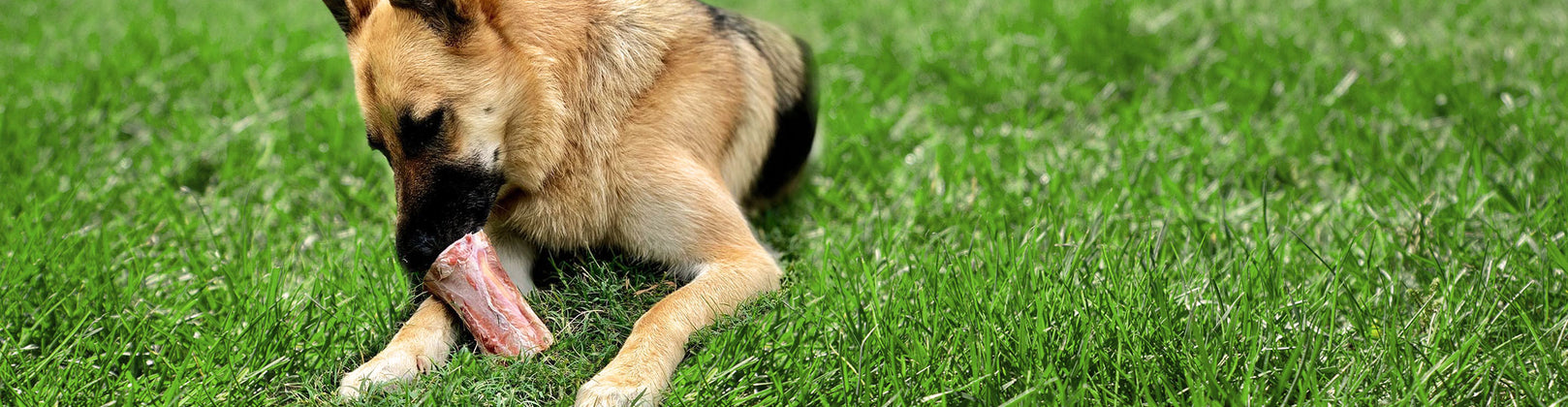 Dog Bone Cheatsheet: The Serious Differences Between the Types of Dog Bones