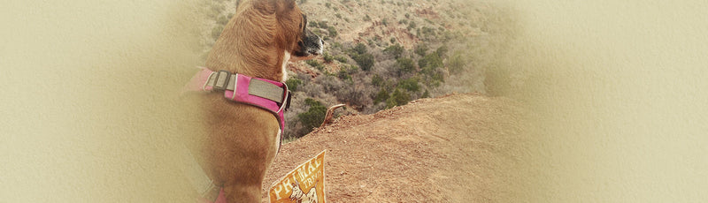 Dog-Friendly Hikes Around the U.S.