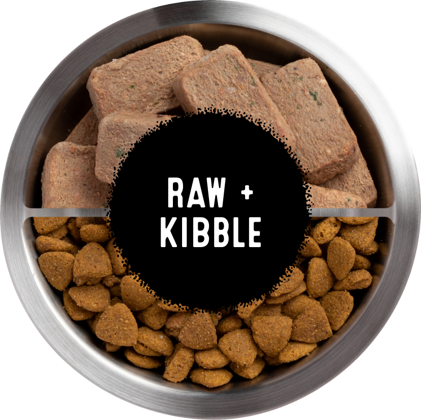 Mixed Kibble and Raw Bowl