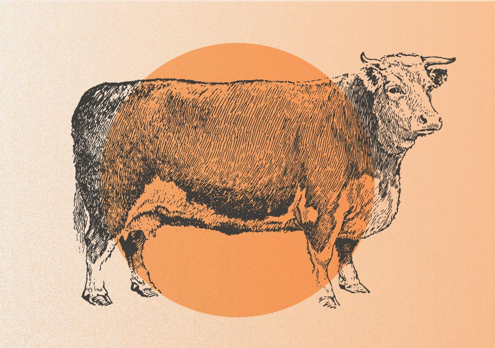 Beef: The Energizing & Fortifying Protein