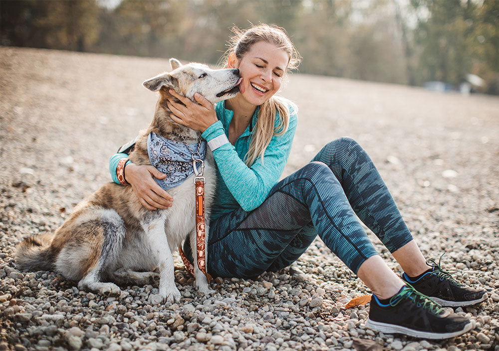 Digestibility & Commercial Pet Food