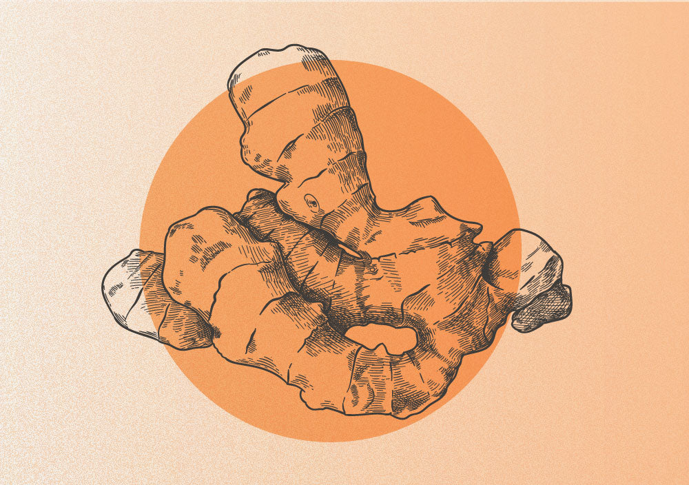 The Spice of Life: Ginger & Turmeric