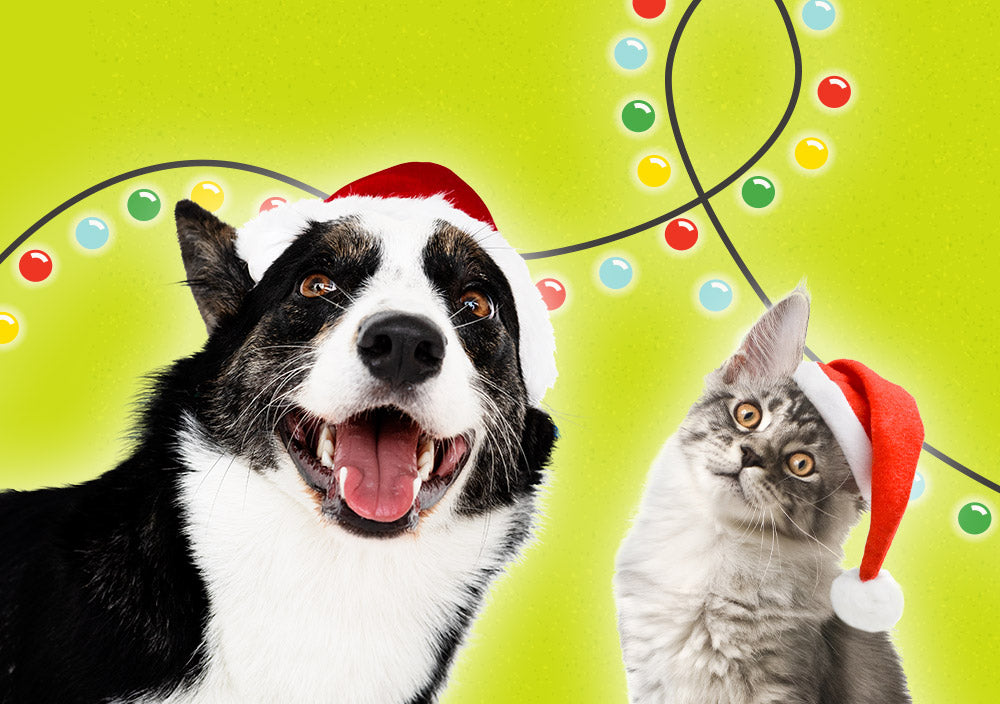 Holiday Pet Safety 101