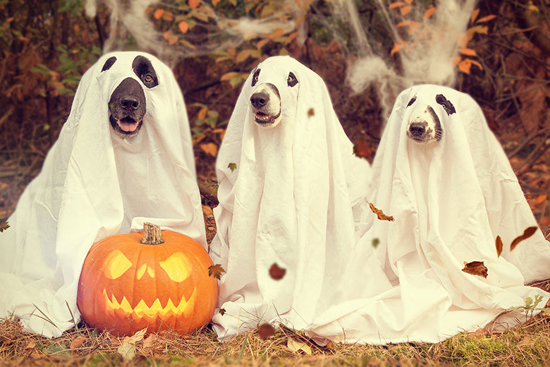 It's Howl-o-ween! 4 Easy Tips To Help Your Pet Enjoy the Holiday