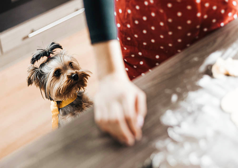 A Feast for Luna & Leo: How to prepare a 4-course Thanksgiving meal for your pets