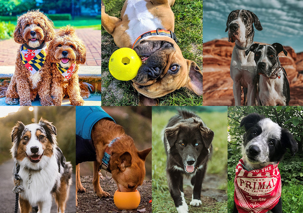 Meet the Primal Pack: The Furry Brand Ambassadors Who Love Primal