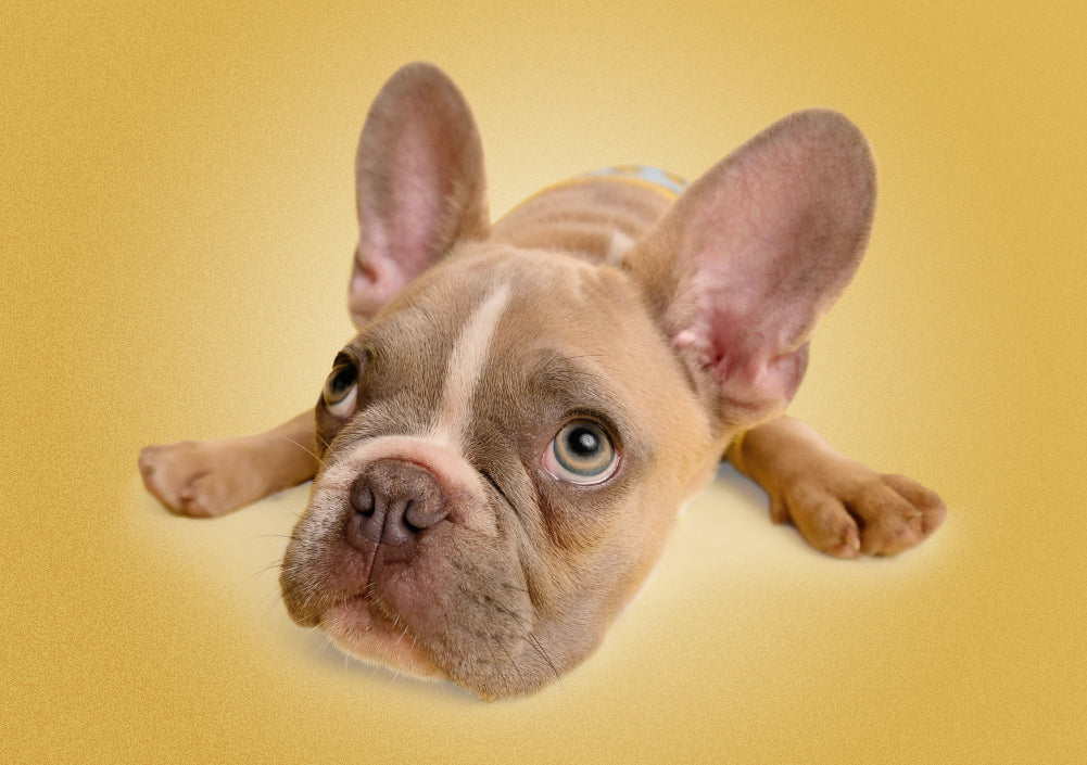 3 Ways to Prevent Boredom in Your Pup