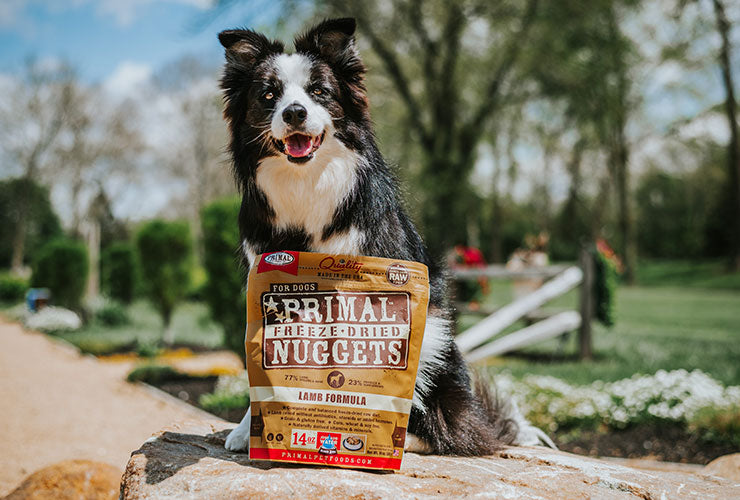 Border Collie Outdoors with Bag of Freeze-Dried Nuggets