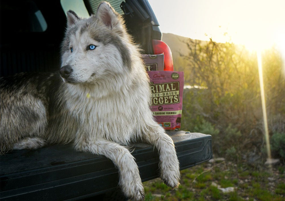 Road Tripping with Rover: 5 Tips for Pet-Friendly Trips