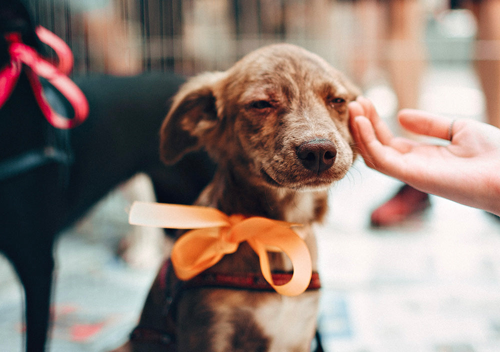 A Helping Paw: 3 Tips for Helping Animals in Need