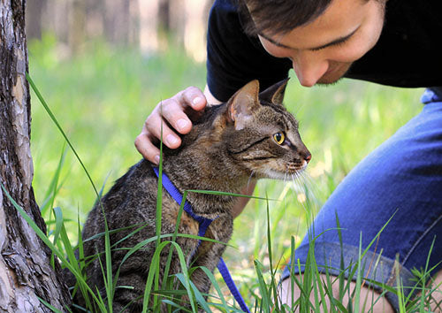 10 Tips For Training A Cat To Walk On A Leash - Yes It CAN Be Done!