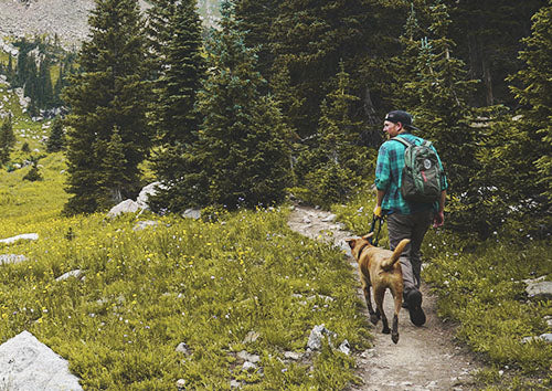 Tips for Hiking with Cats and Dogs