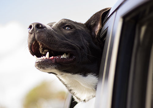 7 Vital Tips For Driving Cross-Country With Pets