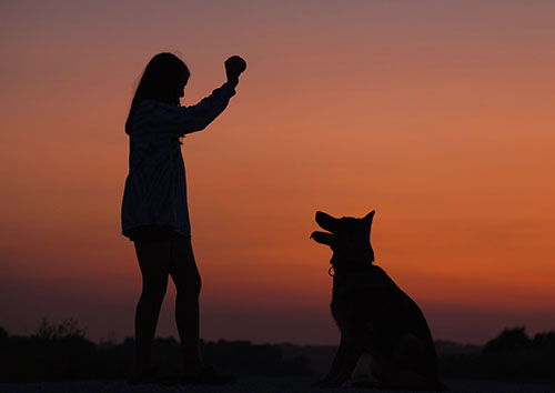 Click Your Pet's Good Behavior Into Place