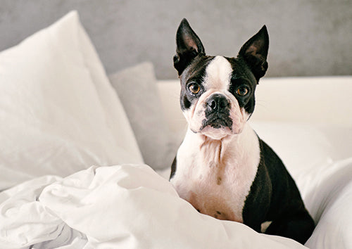 3 Tips For Keeping Your Pup Entertained While You're Away