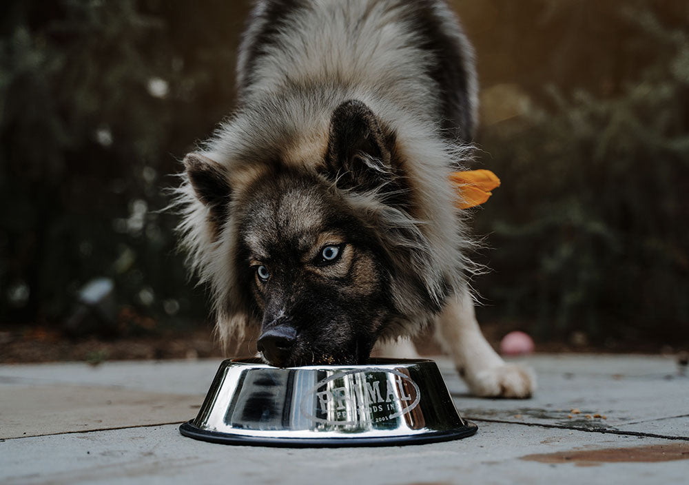 A Bowl By Any Other Name: 3 Simple Questions to Help You Choose the Best Bowl for Your Dog